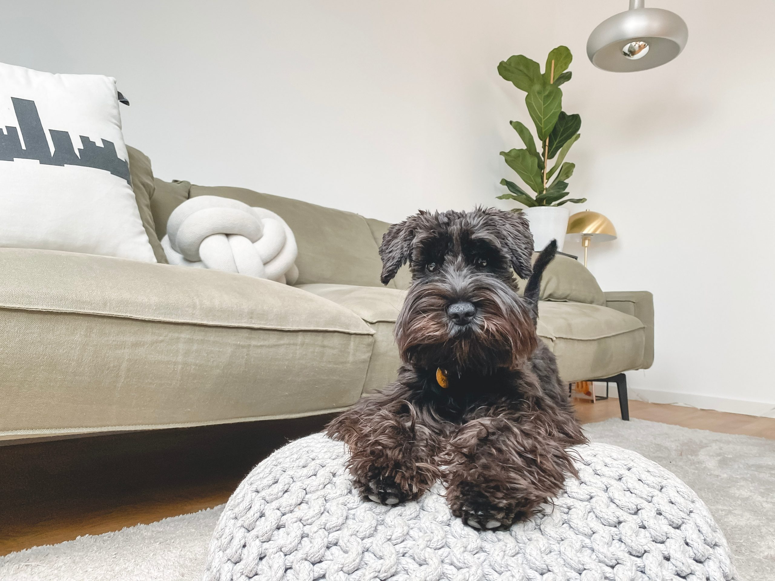 Tips For Owning A Dog When You Work Long Hours