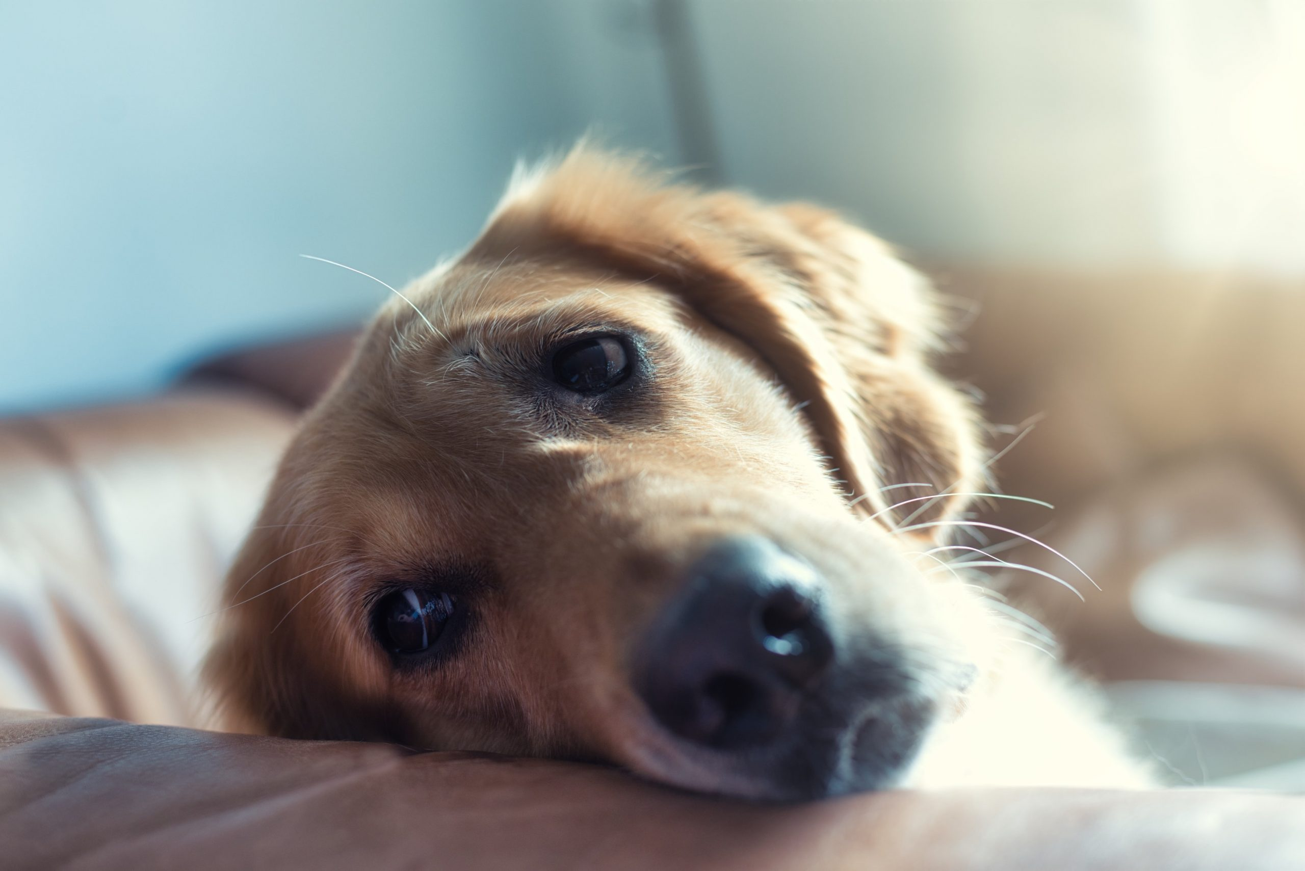 How To Tell If Your Dog Is Unhappy