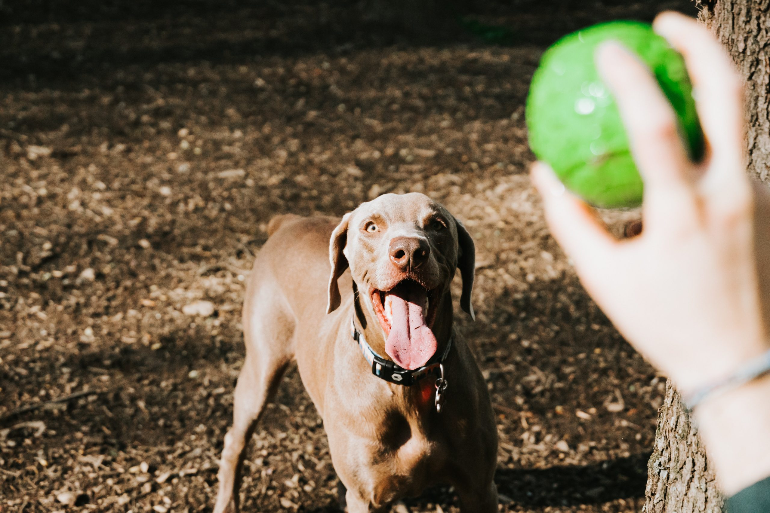 Got A Hyper Dog? Here Are 5 Tips To Help